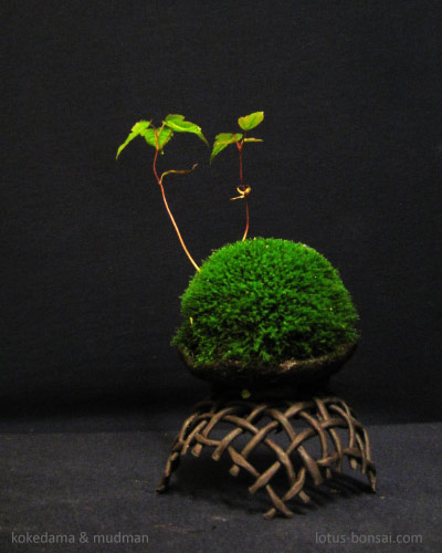 1000 images about kusamono and kokedama on pinterest. Black Bedroom Furniture Sets. Home Design Ideas